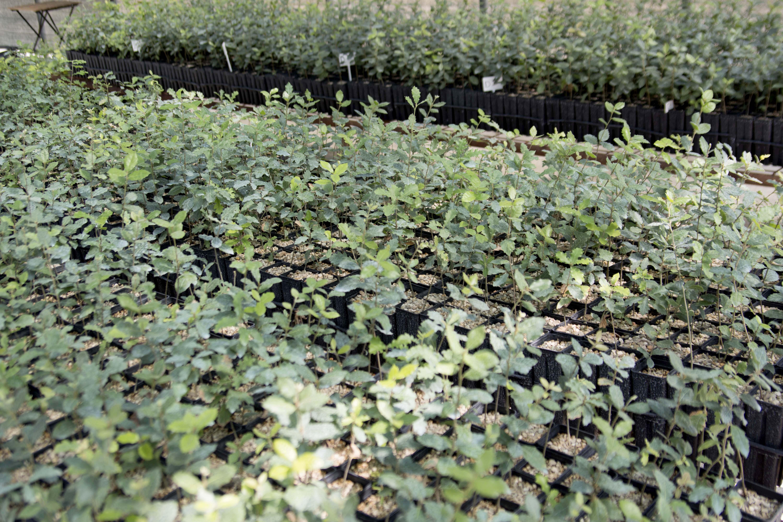 Piante da Tartufo Certifcate in Abruzzo - MicoVivai